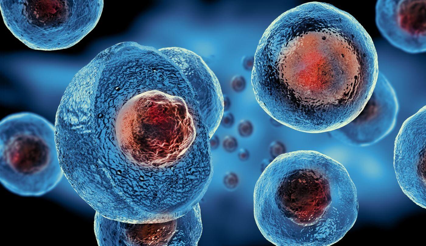 Stem Cell For Arthritis Do They Work Sport Doctor London